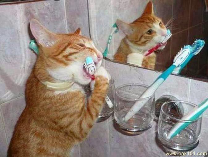 cat_toothbrush_gwmpw_Pak101(dot)com